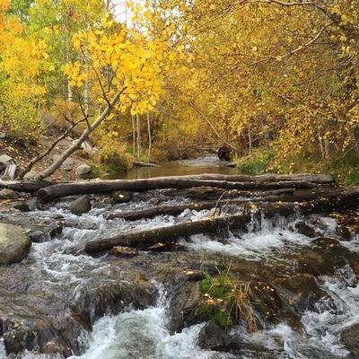 Fall Sierra Stream
