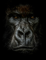 Dark: Gorilla Trophy Room v2