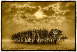 """Stand of Trees, Texas"" by Dan Burkholder"